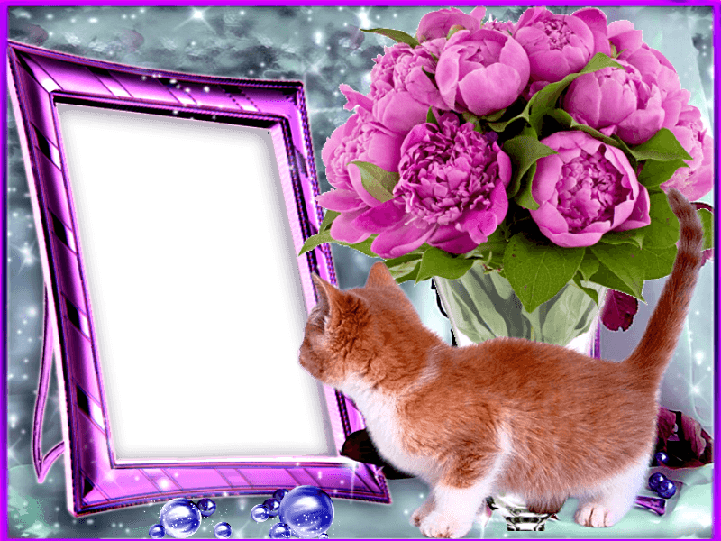 Webka Photo Frames Online App For Free
